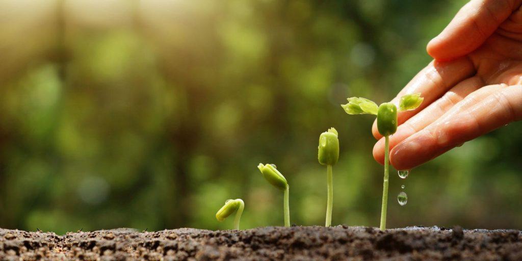 Setting up a lead nurturing program